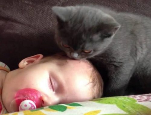 Cute Cats And Kittens Licking Babies Head Compilation |  BABY AND PET
