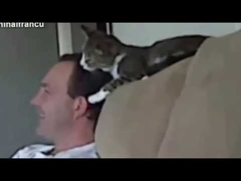 Cute Cats And Kittens Grooming Humans Compilation 2015 NEW