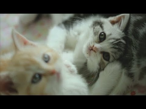 "Today's Cute Kittens ""Kittens playing"" etc.."