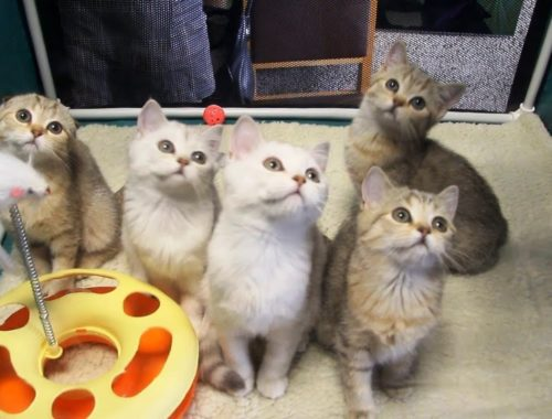 КОШКИ 2019 – Funny And Cute Cats 2019