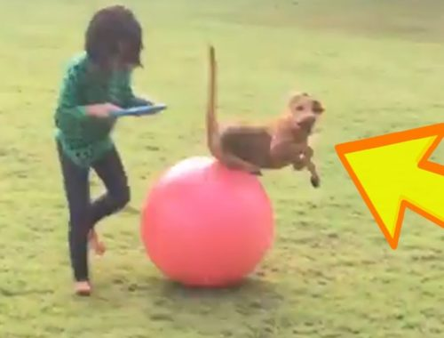 Ultimate Cute Cats and Funny Dogs 2018