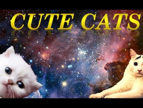 👍 Cute Cats Compilation 2017 👍
