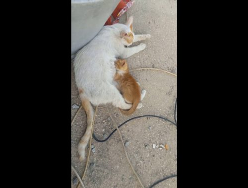 Mother Cat and Cute Kittens