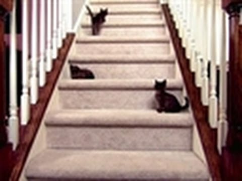 Baby Kittens Face Staircase | Too Cute