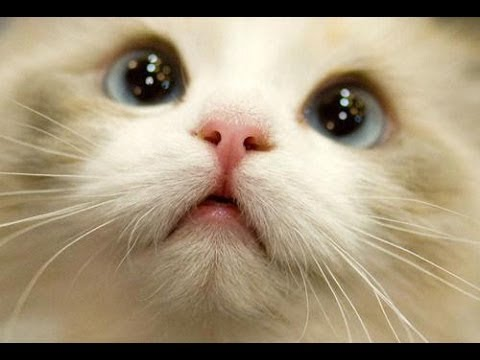 These Cute Cats Will Make You Happy And Love Your Life Again