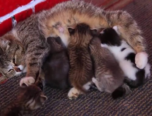 Cute Kittens Love Mom Compilation 2016