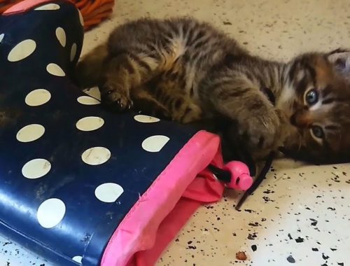 Four Cute Kittens, funny playing with shoes