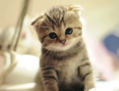 Cute cats ❤️ Cutest cat in the world ❤️ Cute cats compilation 2018