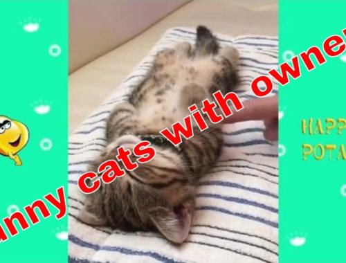 Cute Cats are the sweet friend of owners-Funny cats with owners videos
