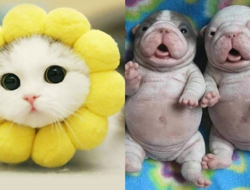 Cutest Animals! Best Cute Kitten and Puppies Tiktok Videos Compilation 2019