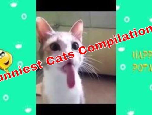 TRY NOT TO LAUGH - Funny And Cute Cats - Funniest Cats Compilation