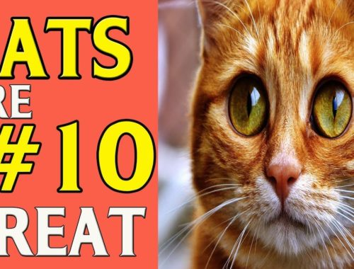 CATS 🐱 Are Great #10 FUNNY & Cute Cats Compilation