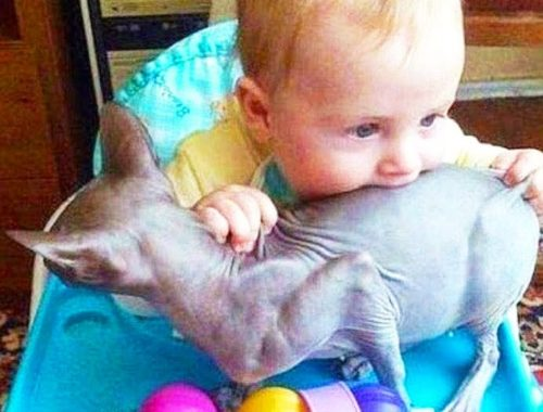 CATS AND BABIES ★ Adorable Cutest Babies Annoying Cat || Top Funny Cat Videos