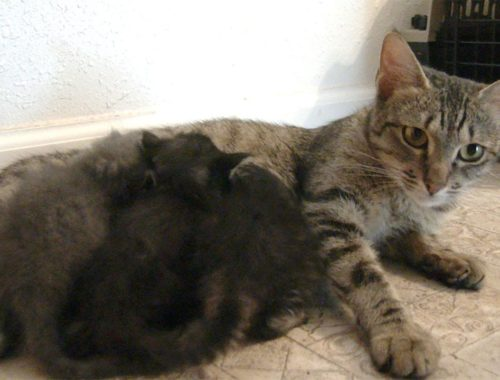 Cute KITTENS And Mommy Cats