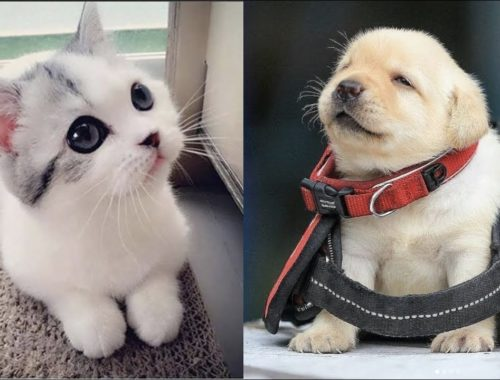 Cutest Baby Dog and Cat - Cute and Funny Dog Videos Compilation #2