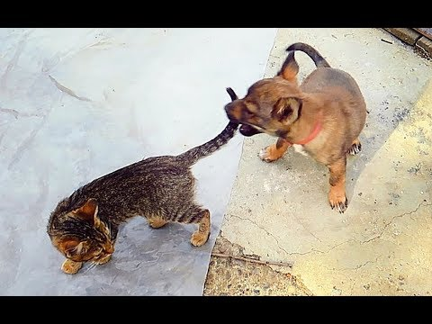 Cute Funny Puppy and Kittens Video / Puppy and Kittens Best Friends