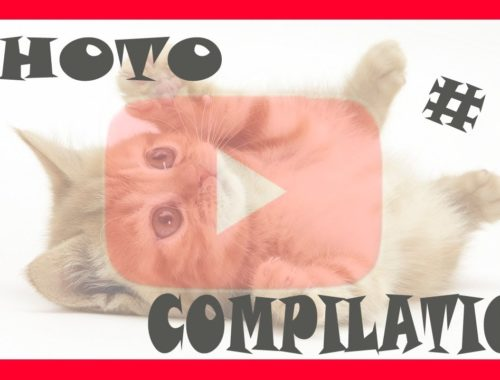 #1 FUNNY and CUTE CATS compilation - ♥♥Beautiful cats♥♥ - (Feng Shui)