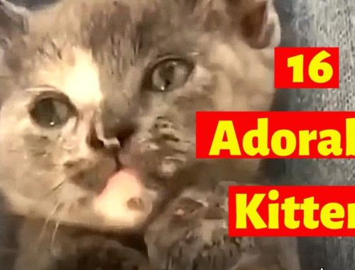 Cute Kittens | Cute Kitten Compilation - Cutest Eva !!