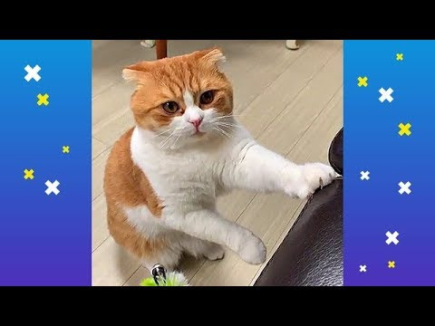 Cute cats videos Compilation #3 Cutest cats