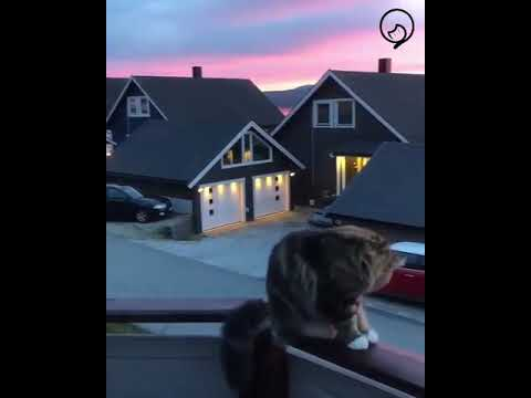 Funny Cats and Cute Kittens Will Make Your Day Part 18