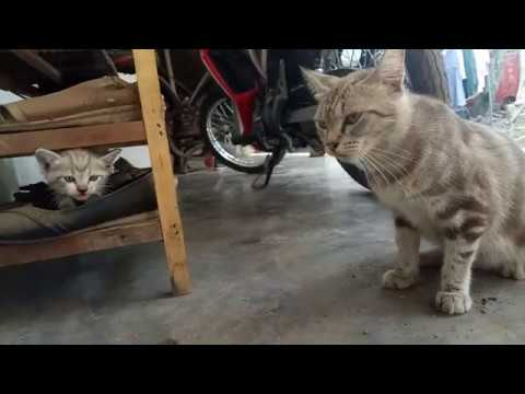cat mother with her child, cute kitten