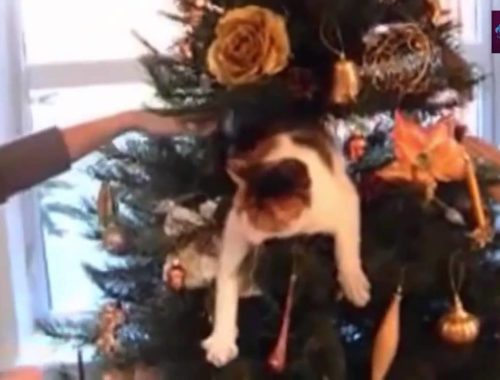 Funny videos - cute cats and dogs love christmas
