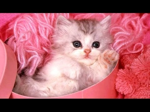 Cutest Kittens and Puppys  - Cute Cats and Dogs || FunnyVines