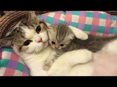 ♥Happy Cats Compilation - Cutest Cat Ever 2018♥ #4
