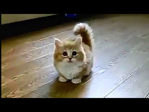 Very Cute Cats | Kittens Amazing Video | EnJoY Entertainment