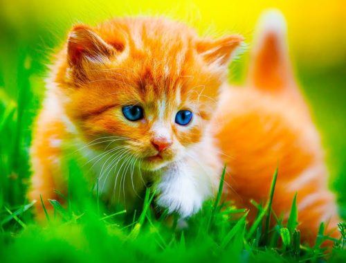 Cat looking out for kittens safety!   Cute and Funny Cats Videos 2019 😸🐈   Animals Doing Things