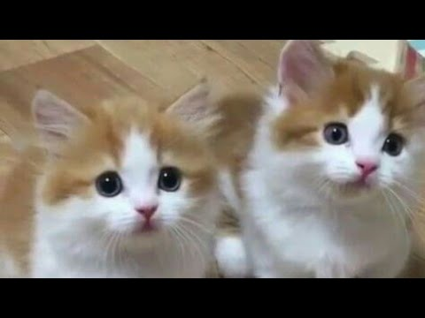 Funny Kittens Meowing - Cute Cats 😻🐈