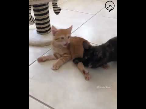 Funny Cats and Cute Kittens Will Make Your Day Part 26