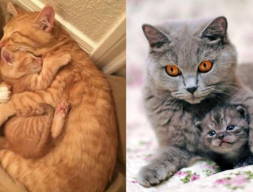 Cute Cats and Mom Together # 6