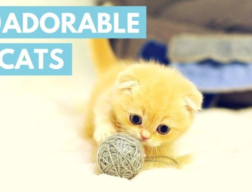 Cute Cats That Will Make You Fall In Love