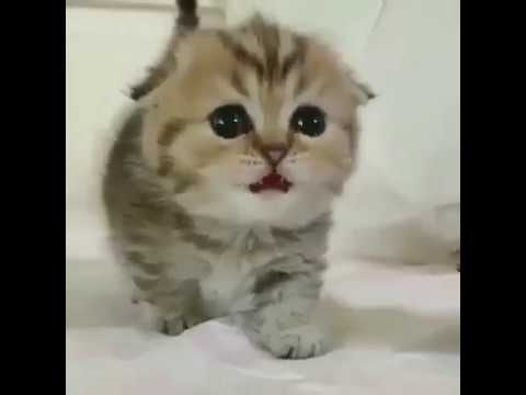 Cute kittens playing | It's Petting | Compilation