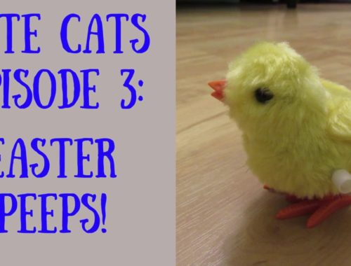 Cute Cats Episode Three : EASTER PEEPS!   |   Cats Playing with Toys