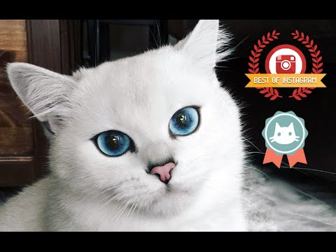 😻 COBY THE CAT   CUTE CATS VIDEOS FROM INSTAGRAM   cobythecat