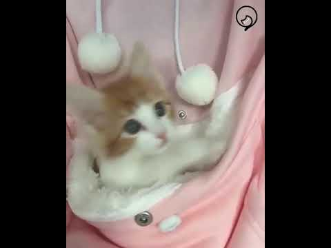 Funny Cats and Cute Kittens Will Make Your Day Part 29