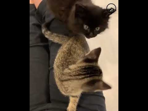 Funny Cats and Cute Kittens Will Make Your Day Part 28