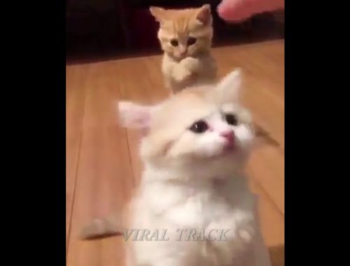 Watch Awesome Video Of These Cute Kittens | Cute Kittens Compilation