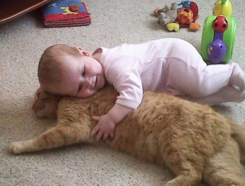 Cutest & Funniest Babies Playing With Funny Cats - Babies Funny Video with Cute Cats