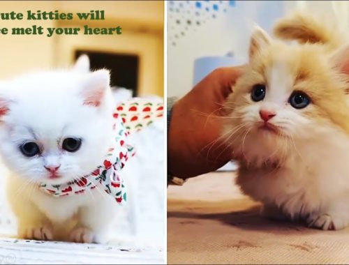 Animal Chanel - Cute Cats Compilation Cutest Cat Video Ever #Part1