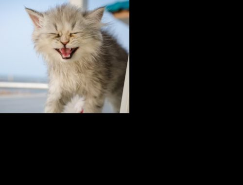 Cats Meowing - Cute Kittens Meowing - Cat Meowing Video - Kitten Meowing Videos #21