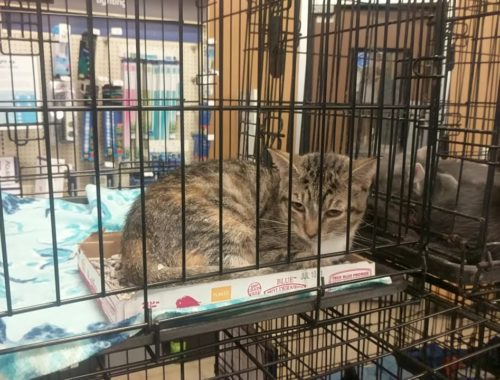 CUTE CATS IN CAGES-------  AWW,  SAD