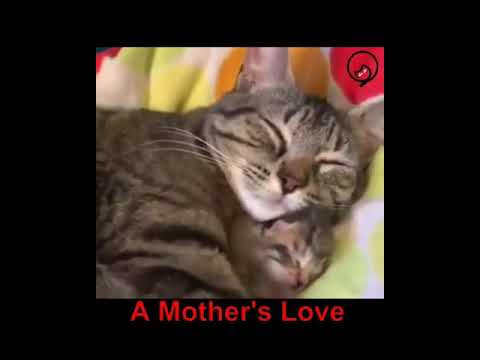 Funny Cats and Cute Kittens Will Make Your Day Part 32
