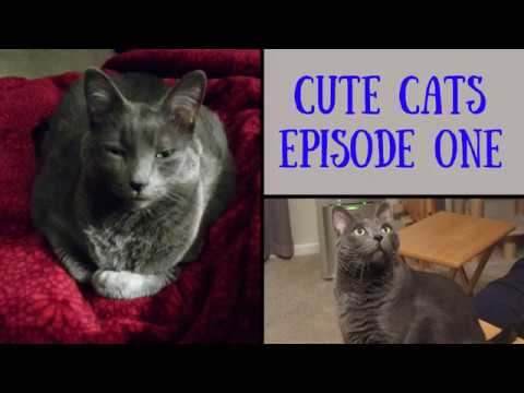 CUTE CATS - Episode One