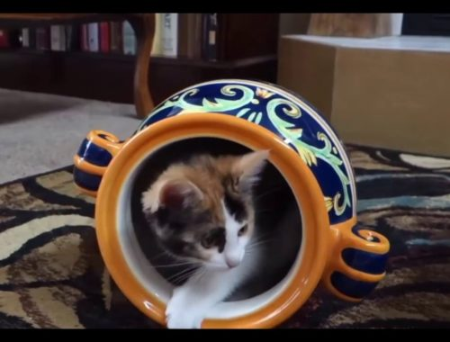 Cute Kittens Video Compilation 2016 ♥