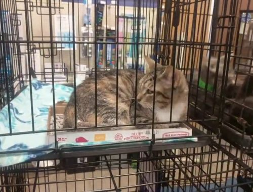 MORE CUTE CATS IN CAGES PT2