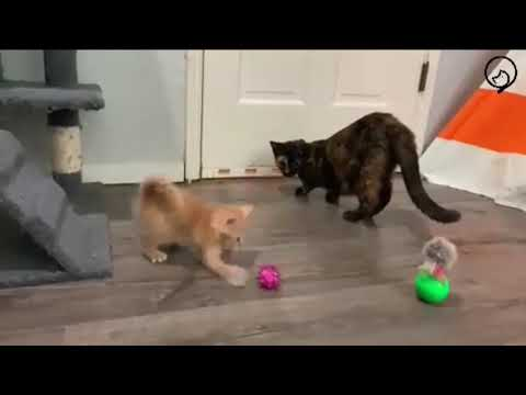 Funny Cats and Cute Kittens Will Make Your Day Part 33
