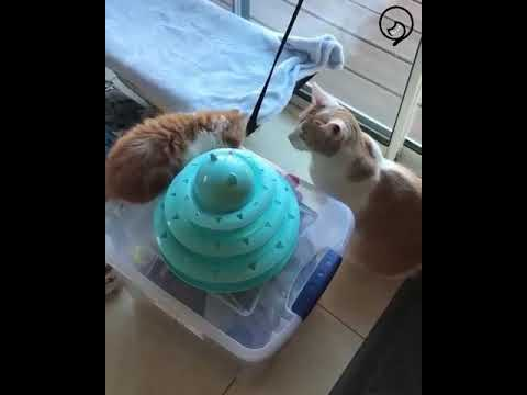 Funny Cats and Cute Kittens Will Make Your Day Part 36